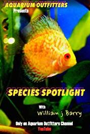 Species Spotlight The Midas Blenny (2014– ) HD online
